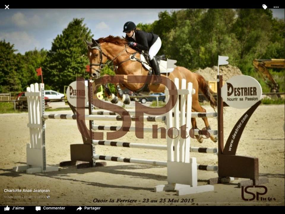 ecuriedelaboissiere77-chevaux-a-vendre-01
